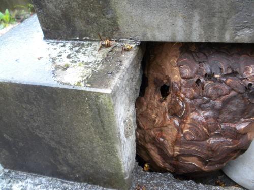 3.カロート内にスズメバチの巣