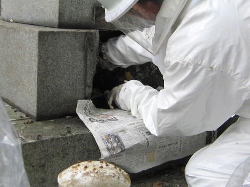 6.カロート内のハチの巣を専門業者による駆除