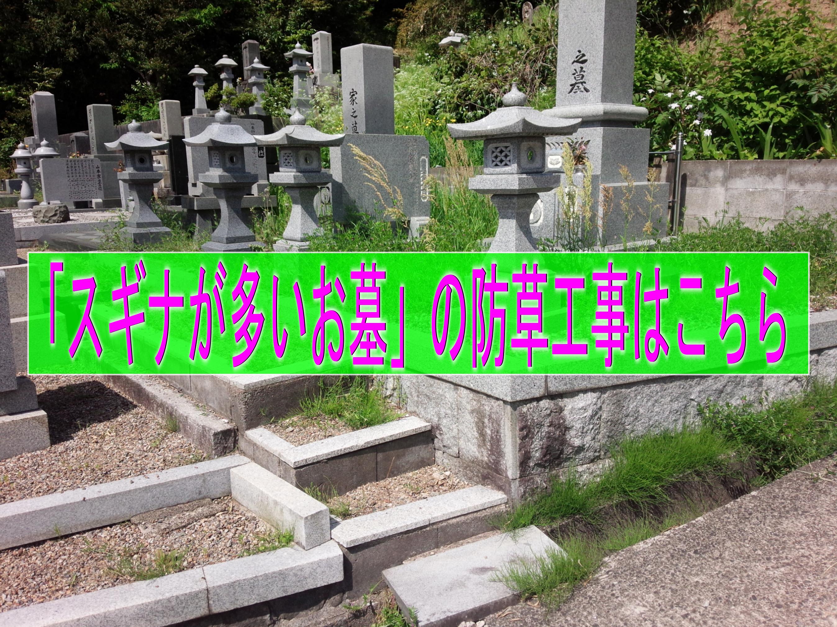 スギナが多い墓