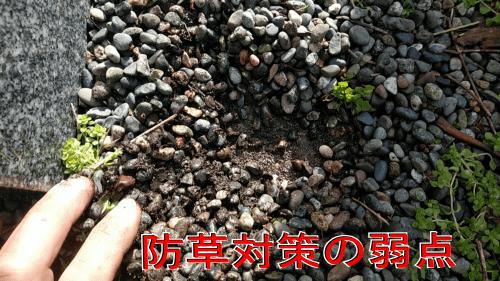 防草対策の弱点